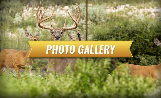 Cypress Ridge Hunting Preserve Photo Galleries